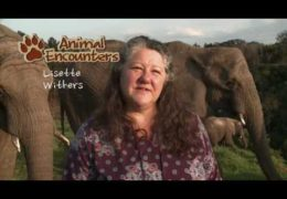 Animal Encounters – Episode 1 Elephants